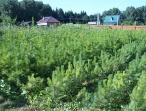 Посадочный материал для озеленения дачных участков